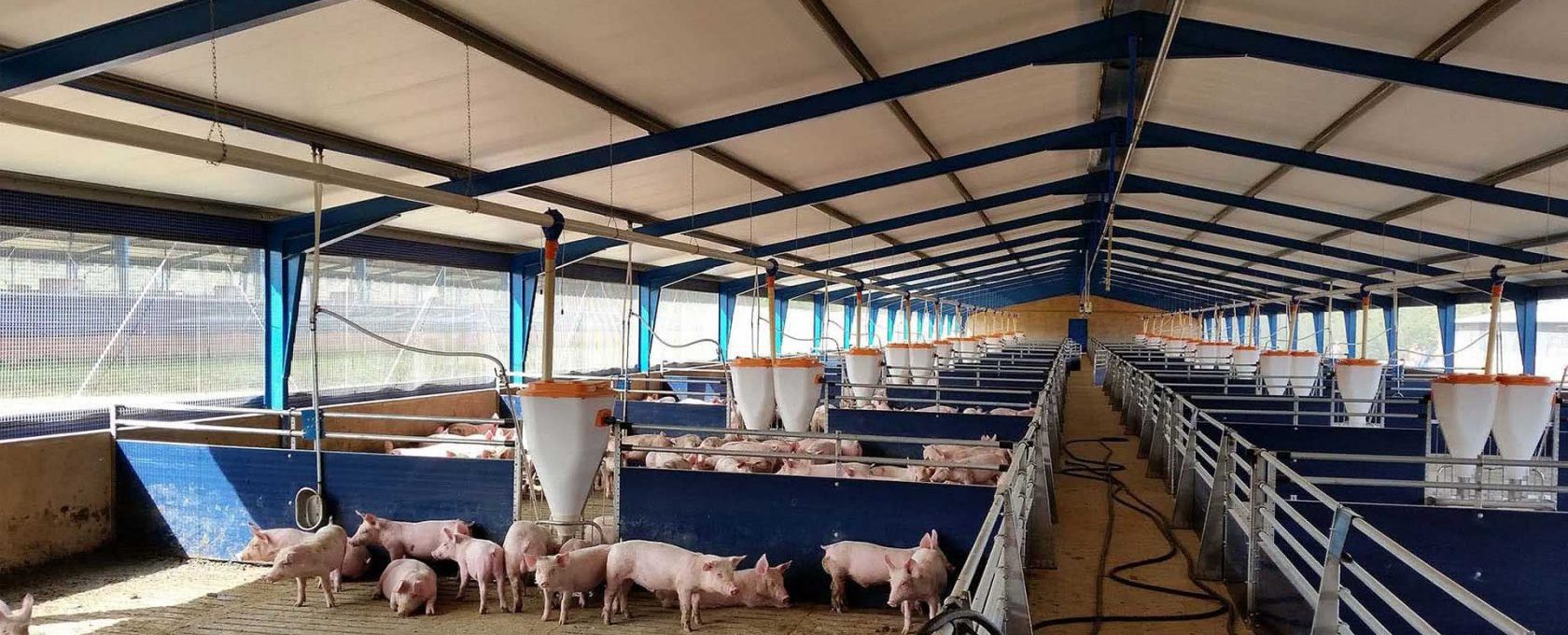 Agricultural Steel Structure - Piggery -Rigtech Steel Structures